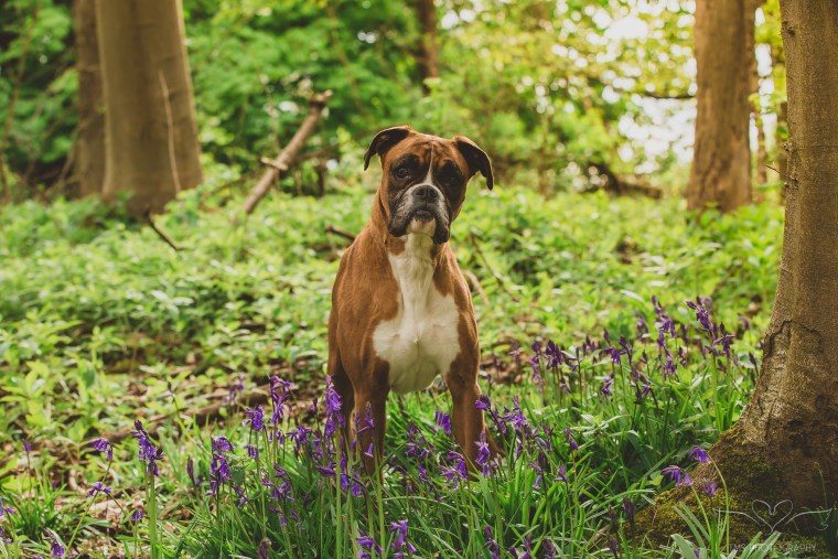 dog_photographer_Derbyshire-13
