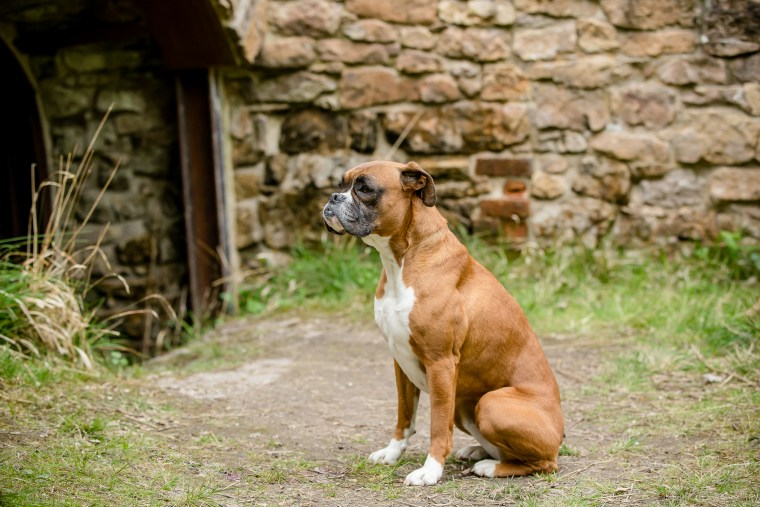 dog_photographer_Derbyshire-21