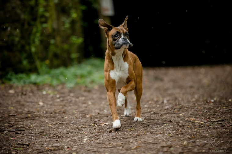 dog_photographer_Derbyshire-34