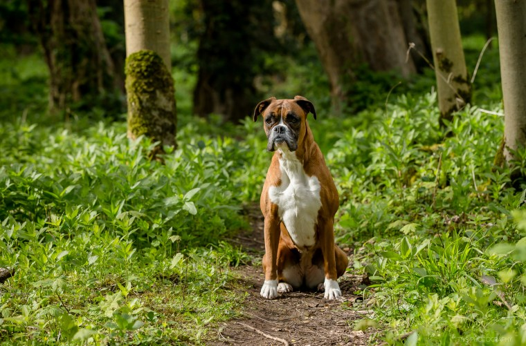 dog_photographer_Derbyshire-5