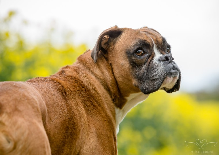 dog_photographer_Derbyshire-50