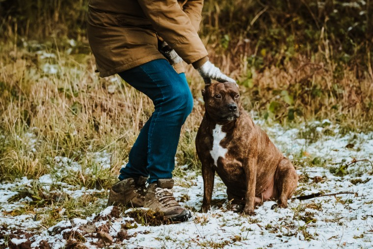 Dog_photographer_Derbyshire_Staffordshire_Bull_Terrier-10