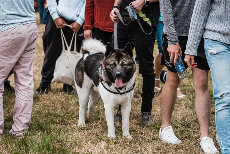 Dog-Fest-Bristol-2019 (32 of 130)