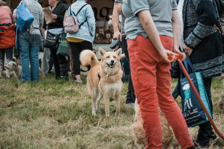 Dog-Fest-Bristol-2019 (62 of 130)