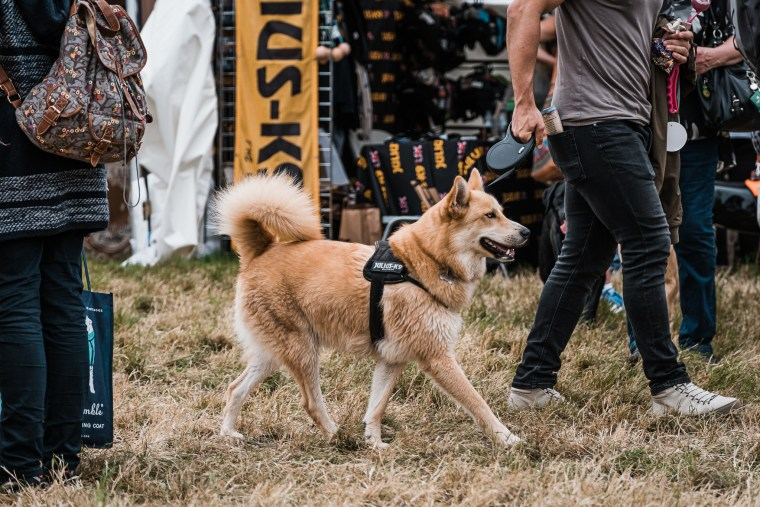 Dog-Fest-Bristol-2019 (63 of 130)
