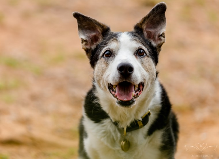 dog_photographer_Derbyshire-3
