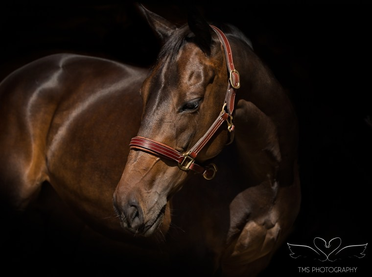 horse_photographer_derbyshire-41