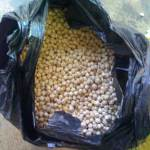 3 Kg of fresh moringa seeds ready for export