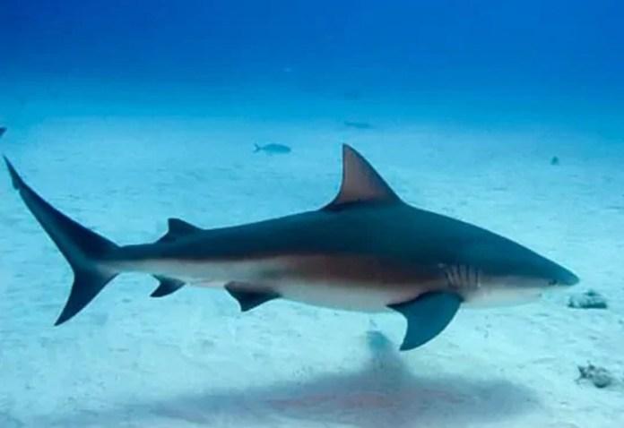 nicaragua, granada, isla zapatera, isla de ometepe, lago de nicaragua, tiburones, tiburon toro,