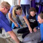 Returning a Rehabilitated Dolphin