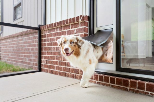 Extreme Weather Sliding Glass Pet Door