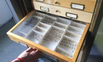 UNH's insect collection forges new path