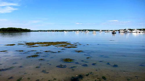 Local cities work to combat pollution in Great Bay