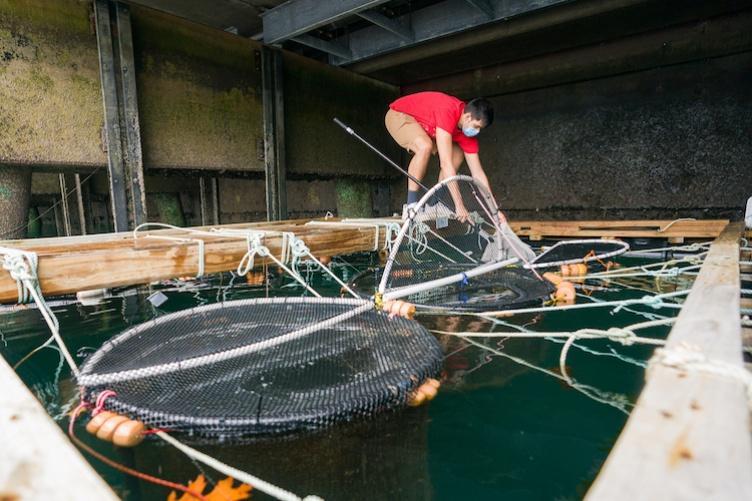 UNH graduate student creates viral TikToks about lumpfish