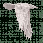 RavenLogo2