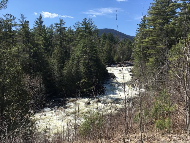 A picture of a fast running stream with rapids going through evergreen trees in the Adirondack Mountains.