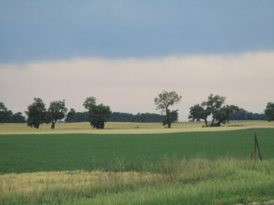 A farm field in Kansas. The forground is deep green then there is a band of gold wheat with a line of trees. The sky is cloudy but clearing.