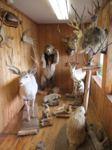 A group of stuff animals in a wood-paneled room.