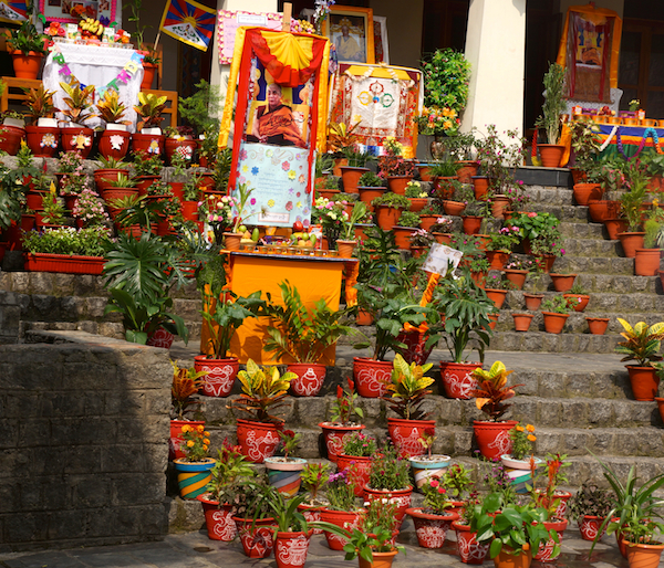 Tibetan nuns annual flower competition 2015