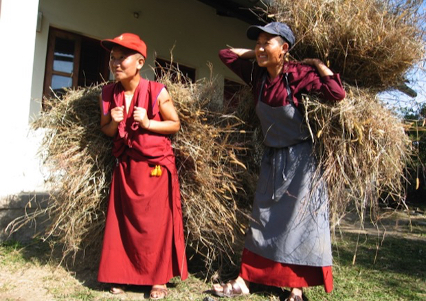 Tibetan Buddhist nuns collecting fodder