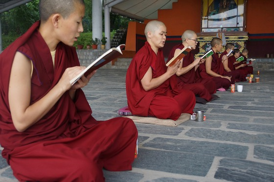 Tibetan Buddhist nuns, Saga Dawa, reading words of the Buddha