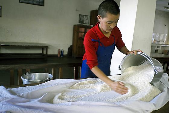 Tibetan Buddhist nun checking rice