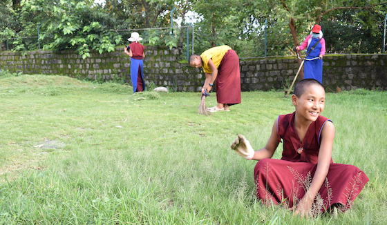 Tibetan Buddhist nuns gardening at Shugsep Nunnery 2020