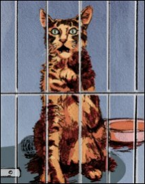 Cage behaviour - stray
