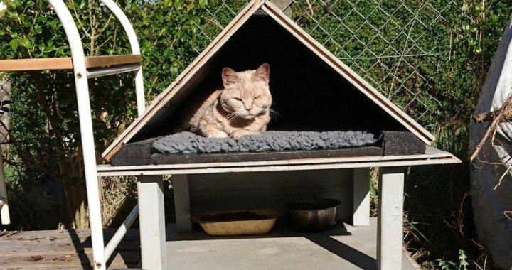 Community Cat Feeding Station