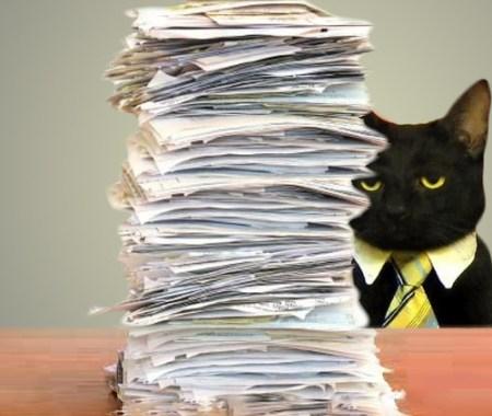 Business Cat Paperwork
