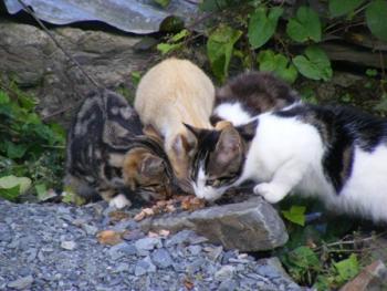 Ferals Feeding