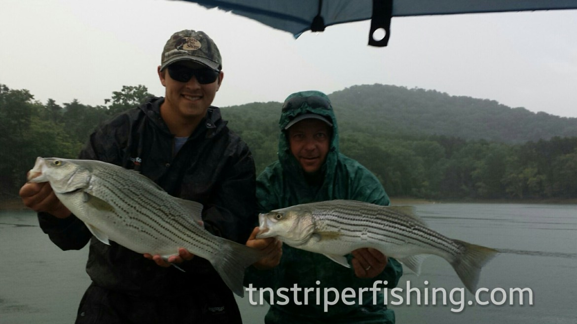 Capt'n Jay Fishing Tour Guide Striper Fishing Tennessee