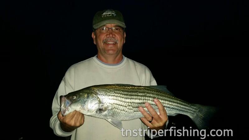 Tennessee Lakes Cherokee Lake Norris Lake Fishing Guide Service