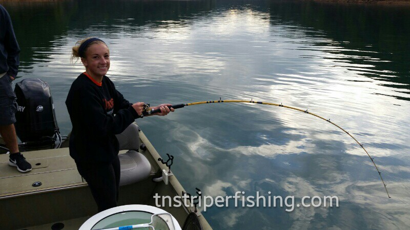 Premiere guided fishing best experience in Tennessee finding Bass striper fish