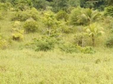tobago land for sale cheap