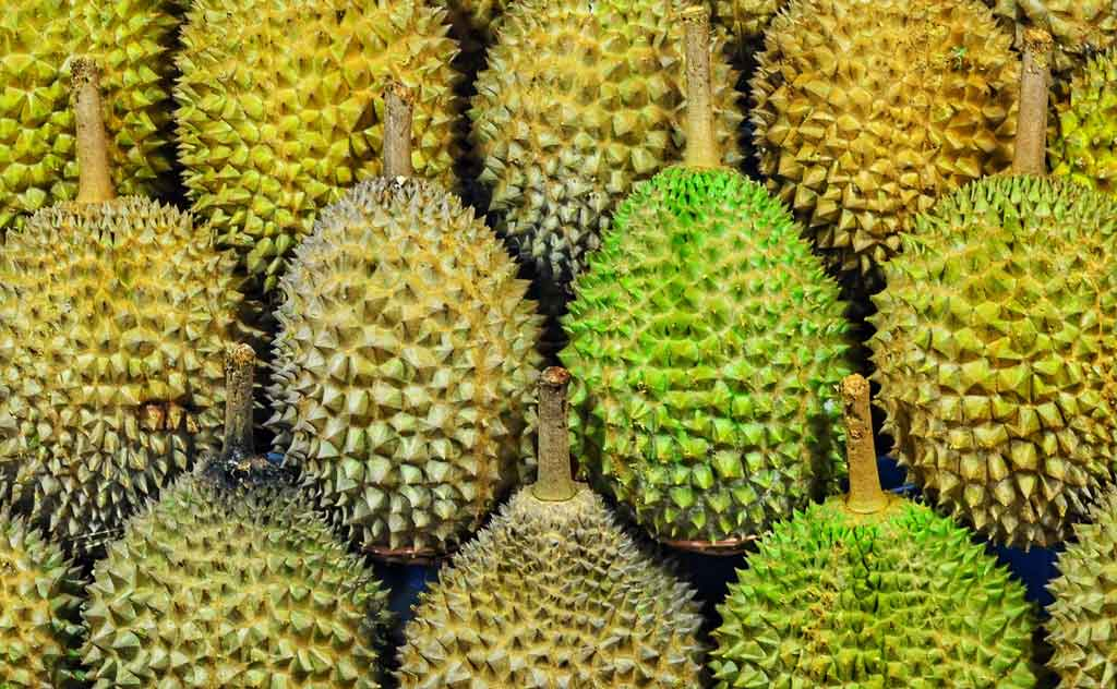 Durian – The Stinky Fruit in Thailand is also known as the 'King of Fruits'