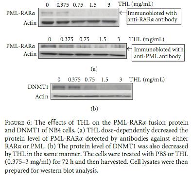 Efek TXL pada Protein Fusion PML-RAR Alpha