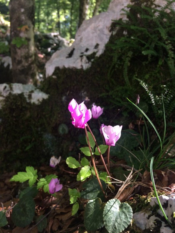 Wild flowers around the grounds of Pradis Grotte.