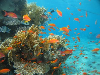 Brightly colored fish and coral
