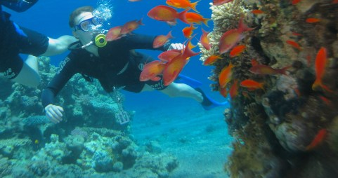 Diving the Red Sea
