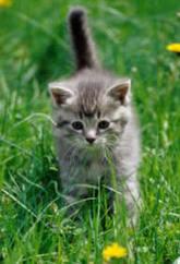 baby_kitten_1