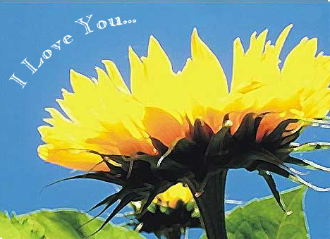 sunflowerlove2