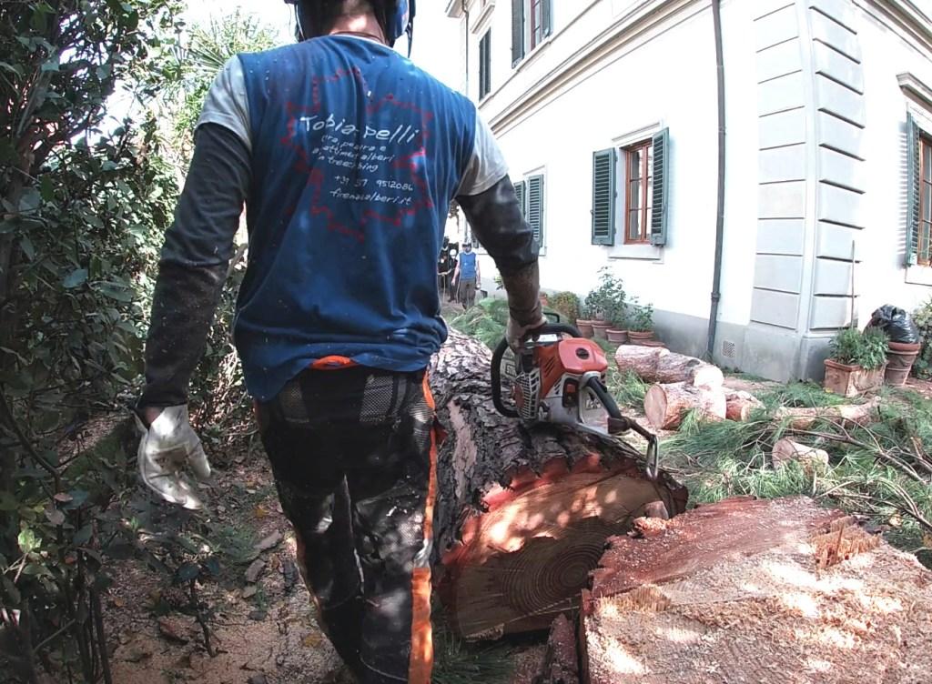 taglio alberi a Firenze
