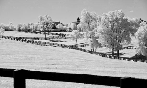 HorseBarnw:fences-8318