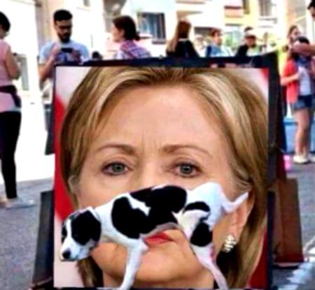dog votes