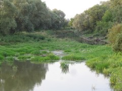 Koryto Bugu oddzielające wyspę zamkową od lądu w tym roku mało wody