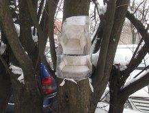 drzewo_polskie