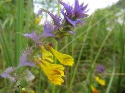meadow31