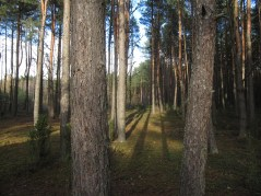 mazowsze_las