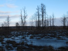 Łąki w Puszczy Białej